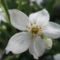 A Mabon Tarot Blog Hop Bouquet
