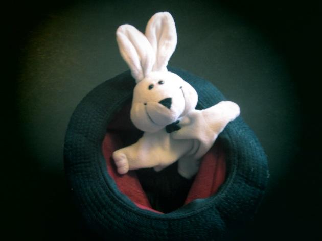 Meet my funny bunny...