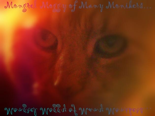 Mongrel Moggy